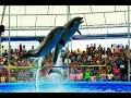 Dolphin Show  Phuket Thailand Dolphin Bay  Nemo , โชว์โลมา ภูเก็ต โชว์ แมวน้ำ 2018