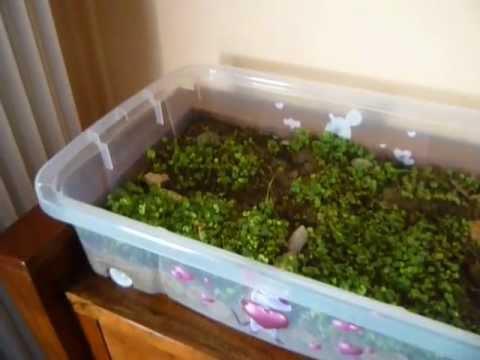 Tartaruga camillina in casa nel terrario youtube for Terrario per tartarughe acquatiche