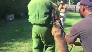 K9 Training Dog Duco Practices Full-Suit Attack | Custom Canine Unlimited