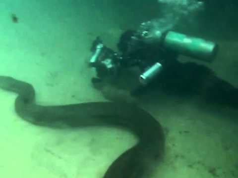 Mergulhando com Sucuris | Diving with Anacondas