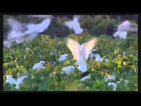 WILD BIRDS NATURAL SOUNDS AND RELAXING MUSIC