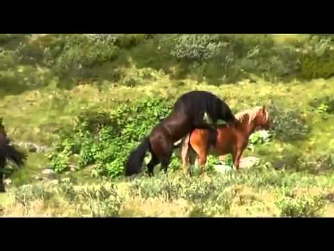 Diese erstaunliche entdeckung - Videos animales salvajes apareandose ...