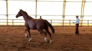 How to Fix Horse Pulling Away While Lunging - Tips from Pat Parelli