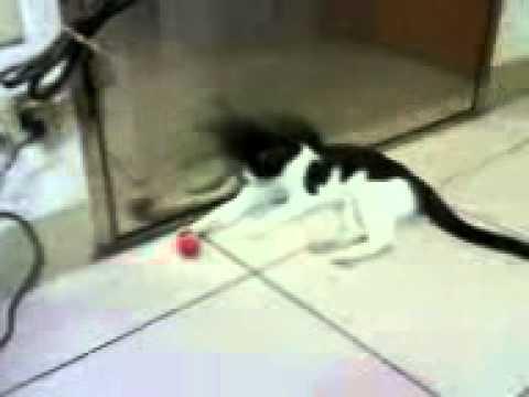 貓愛上老鼠(球)