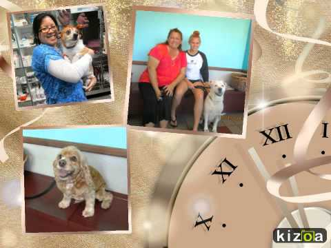 Kizoa Video Maker: SeaCoast Veterinary Group: 2014 In Review