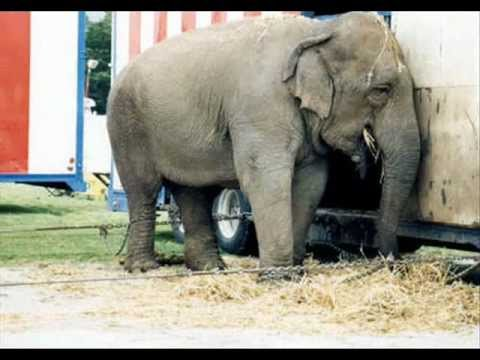 Circus - Fun? Not for animals