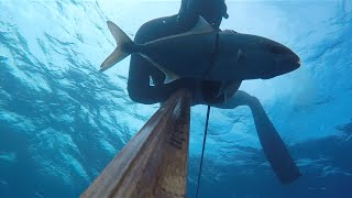 Akya-Grida (amberjacks,golden grouper) spearfishing From izmir/Turkey By Cihan ATAHAN