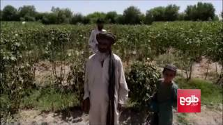 Taliban Using Civilian Houses As Shields In Helmand War