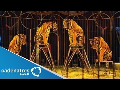 Aprueban ley que prohíbe animales en circos en el DF / Approved law banning animals in circuses