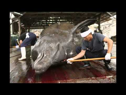 Sea Shepherd 2013 - March 10 - Last News