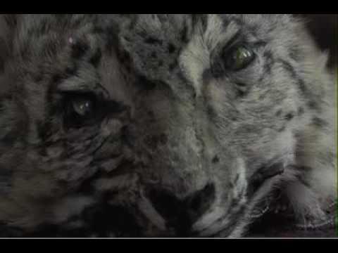 hayvanlarla sikis izle filmi FuLL izleHD izleTr Dublaj720p