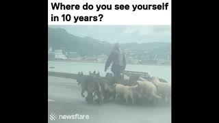 German Shepherd Dogs Compilation #3