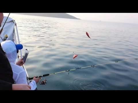 рыбалка в нячанге 2016