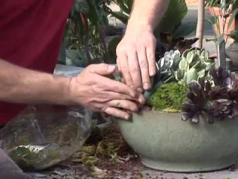 How To Plant A Cactus Garden