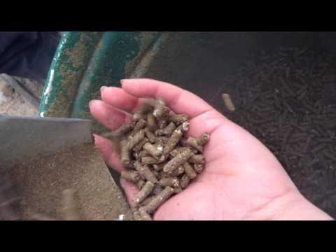 ovejas máquina de pellet feed