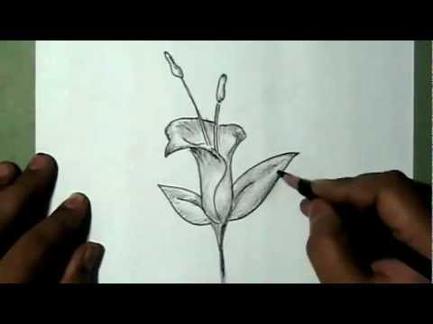 Bell Flowers Drawing How to Draw Bell Shaped
