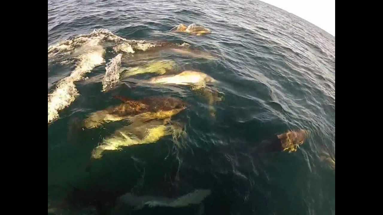 Regal sword tuna trip 9 25 12 w desire youtube for H m landing fishing report