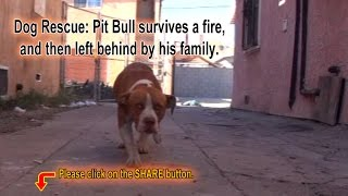 Pit Bull survives a fire, and then left behind by his family.  Please Share.