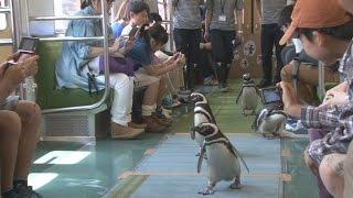 東武鉄道でペンギントレイン