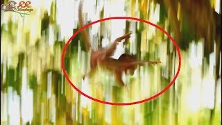 OMG ! Million Scare ! Poor Barbi d0 wrong catch mom fall from high| Barbi hurt cry and scare much.