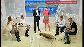 Хищники разъезжают в авто по улицам Владивостока