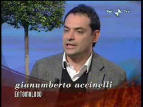 GEO&GEO  RAI3 – EUGEA PRESENTA IL GIARDINO LETTERARIO DI HERMANN HESSE