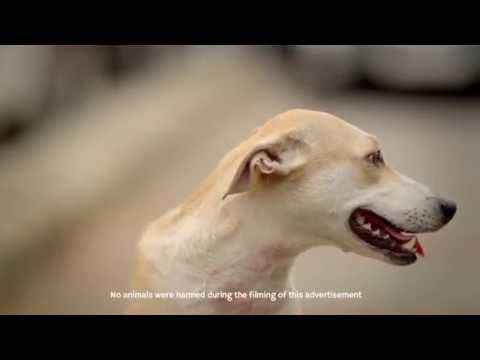 Godrej aer – Dog on pollution