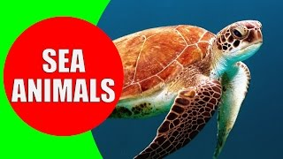 Sea Animals for Children – Learn Sea Creatures and Sea Animals with Real Life Videos