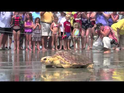 Sea turtle release on Kiawah Island - SC Less Traveled Insider