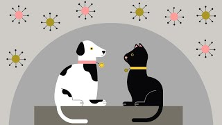 video: Can animals catch and spread coronavirus? Latest advice for pet owners