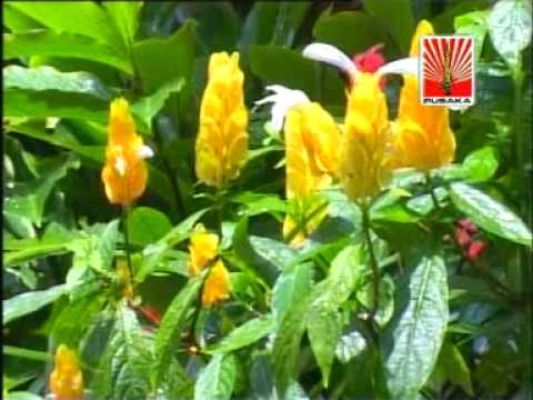 download lagu Ladrang Rambang Slendro Sanga gratis