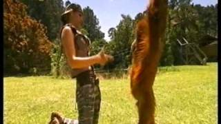 Orangutan Makes a friend with a dog