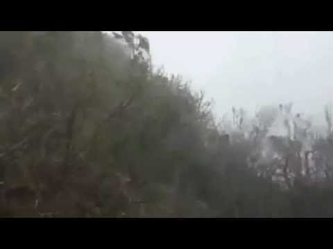 Typhoon Jelawat batters jungle in Okinawa