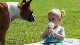 Dog eats little girl's ice-cream