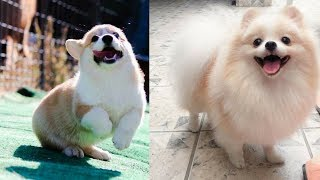Cutes dogs | Cutest dog in the world | Cute dogs clips #1