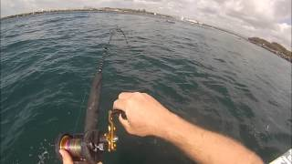 Gold Coast Seaway Yellowtail Kingfish