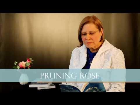 Rose Klix - Pruning Rose