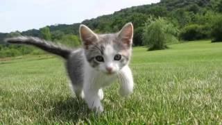 Adorable meets cute movie trailer