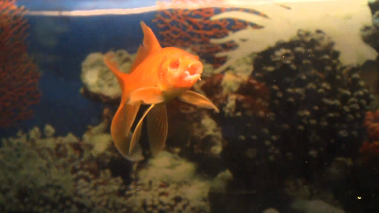 Big eyed goldfish pictures Hillary Clinton spotted wearing supposed back brace