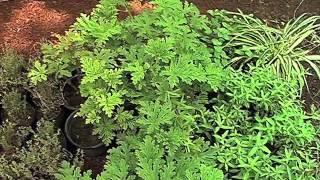 En Veracruz, una de cada tres plantas medicinales mexicanas