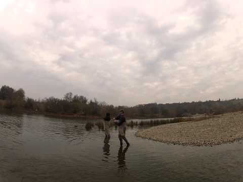 American River Steelhead Fishing
