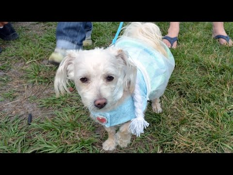 "Disney's Fort Wilderness Halloween Pet Costume Parade 2014 Including ""Frozen"" Elsa, Tinker Bell"
