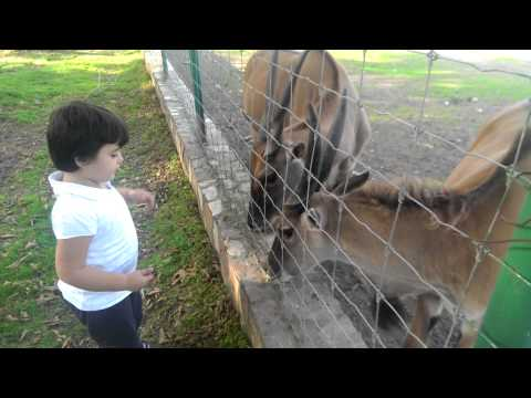 Te kopshti zoo