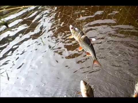 рыбалка на телевизор