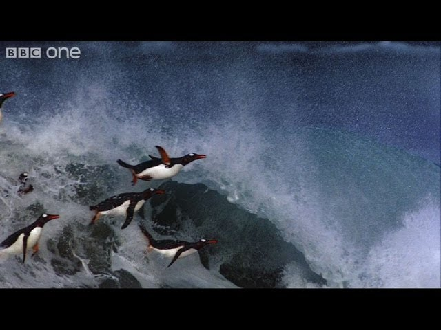 Flying Penguins - Frozen Planet - BBC One