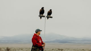 Hunting Jack-Rabbits with Harris's Hawks in Utah: Falconry with Craig Boren