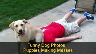 Funny Dogs Compilation   Funny Animals   Funny Videos