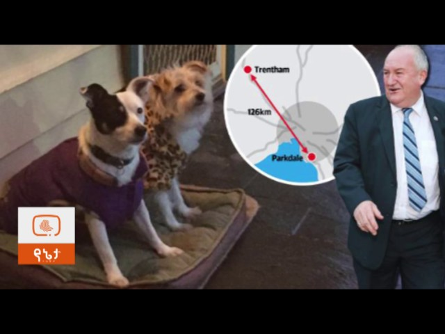 Australian MP uses official chauffeur to shuttle dogs