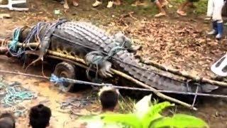 5 Biggest Crocodiles In The World!