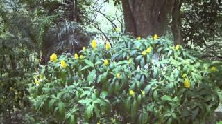 #5757, Pequeñas flores amarillas de un arbusto [Efecto], Paisajes naturales y flores